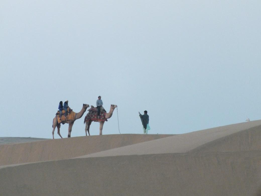 camelshorizon